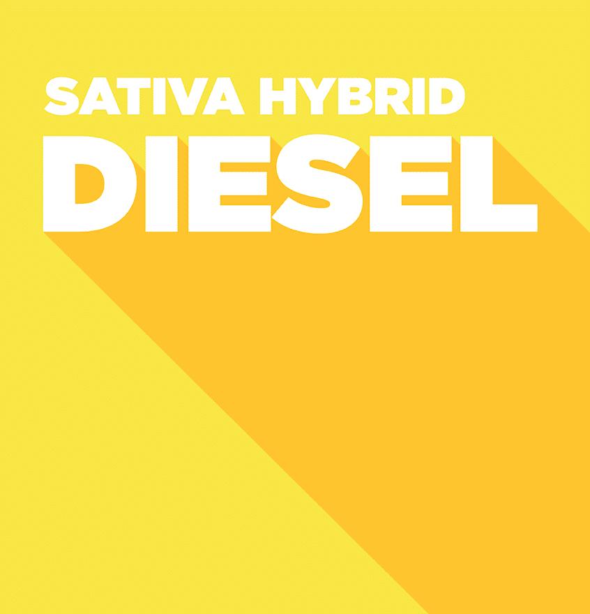 Sativa Hybrid – Diesel