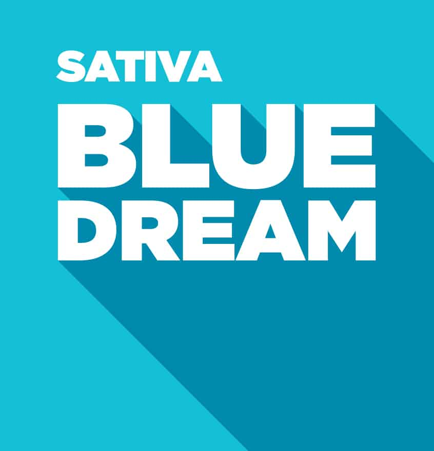 Sativa – Blue Dream
