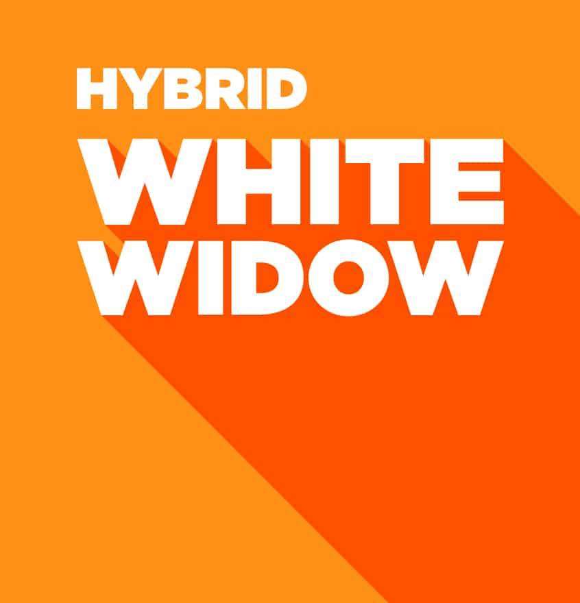 Hybrid – White Widow