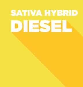 Diesel - Sativa Hybrid