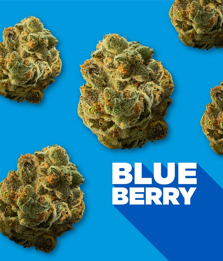 Blueberry with nugs